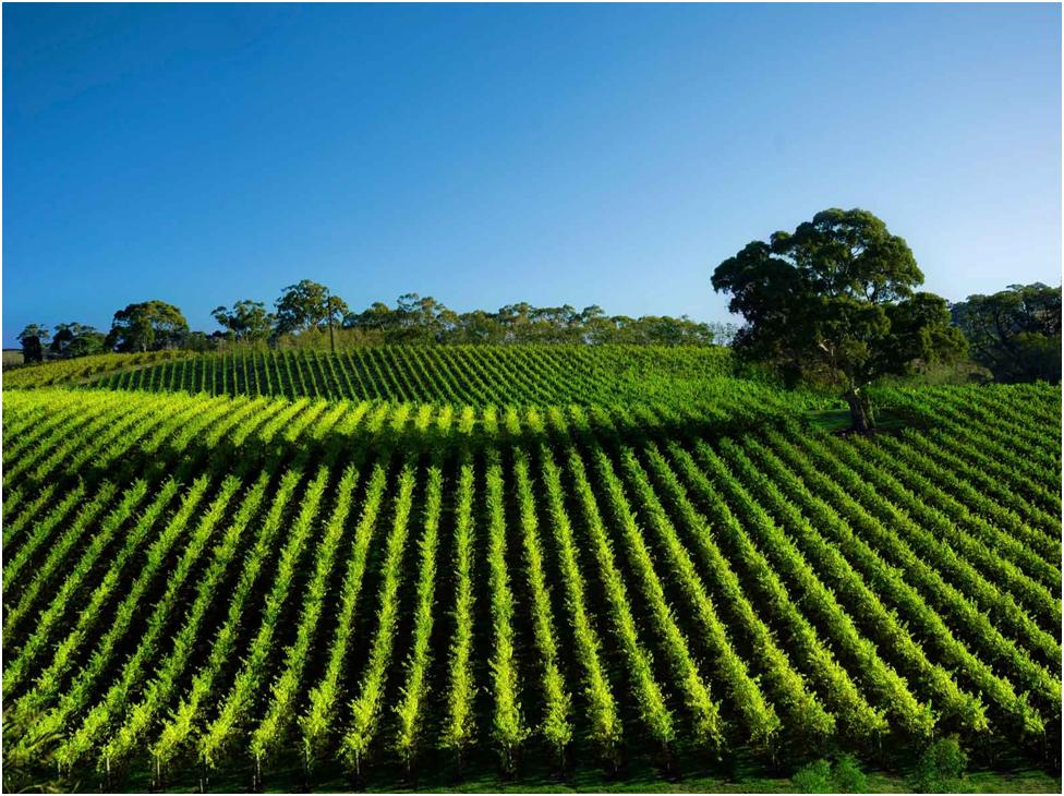 Communication on this topic: How to Pick a Great Wine, how-to-pick-a-great-wine/